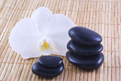 Black stones, white orchis. Stock Photos