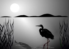 Black stork. Stand on one leg in the light of moon royalty free illustration