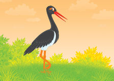 Black Stork Royalty Free Stock Photos