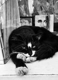A black stray cat lying in front of paintings in a store in Cihangir Istanbul. A black stray cat is lying. it`s eyes are open. Eyes can be seen in the paintings Royalty Free Stock Image