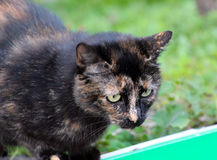 Black stray cat. Picture of a black stray cat Stock Photo