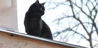 Stray cat. Black stray cat on a roof near a hot chimney Royalty Free Stock Photos