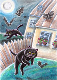Black Stray Cats Chasing Bats. Black stray cats are chasing bats in the moonlight Royalty Free Stock Photo