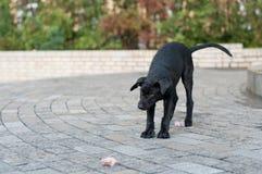Black stray dog Stock Photo