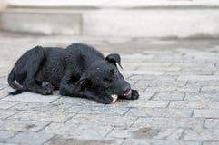 Black stray dog Stock Photography