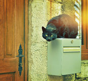 Black street cat jumped on house post box Stock Photos
