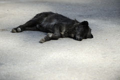 Black street dog Stock Photo