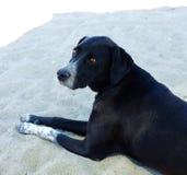 Black street dog resting on sand Royalty Free Stock Images