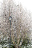 Black Street Light by Snow Covered Trees Stock Photography