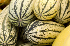 Black striped delicate squash Royalty Free Stock Images