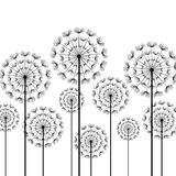 Black stylized dandelions on white background. Black stylized dandelions isolated on white background. Floral stylish trendy wallpaper with summer or spring Stock Images