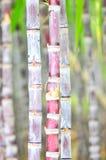 Black sugarcane Stock Image