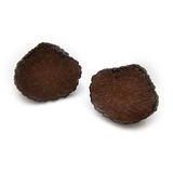 Black summer truffle Stock Image