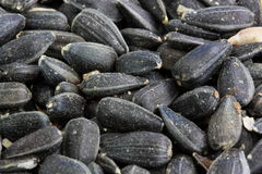 Black sunflower seed Royalty Free Stock Images