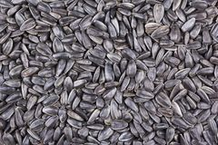 Black sunflower seeds as background Stock Image