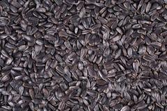 Black sunflower seeds background Royalty Free Stock Photo
