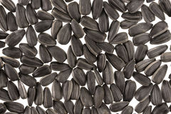Black sunflower seeds background or texture Stock Image