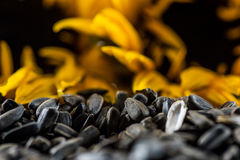 Black sunflower seeds and blurred sunflowers on the background Royalty Free Stock Photos