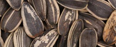 Black sunflower seeds. Stock Images