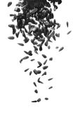 Black sunflower seeds falling down Stock Photography