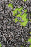 Black sunflower seeds lie on a grassy-green background Royalty Free Stock Photo