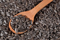 Black sunflower seeds in a spoon Stock Photos