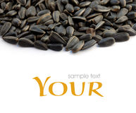 Black sunflower seeds of sunflower Stock Image