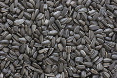 Black sunflower seeds texture or background. Royalty Free Stock Images