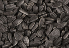 Black sunflower seeds texture or background. Stock Photo