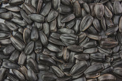 Black sunflower seeds. Stock Photography