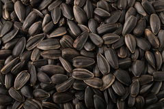 Black sunflower seeds Stock Photography