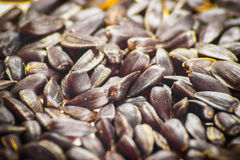 Black sunflower seeds Royalty Free Stock Images