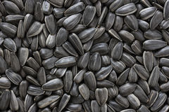 Black sunflower seeds. For texture or background. Close-up of sunflower seeds Stock Image