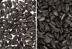 Black sunflower seeds. For texture or background. Collection Stock Photos