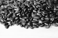 Black sunflower seeds. For texture or background. Food Stock Photography
