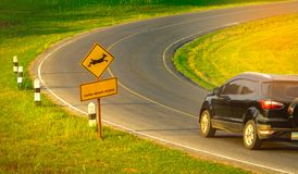 Black SUV car of the tourist driving with caution during travel at curve asphalt road near yellow traffic sign with deer jumping. Inside the sign and have Stock Image