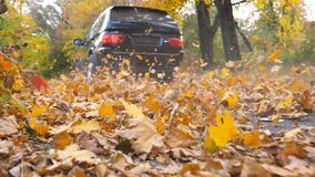 Black SUV driving fast along an empty road over yellow leaves at park. Colorful autumn foliage flies out from under