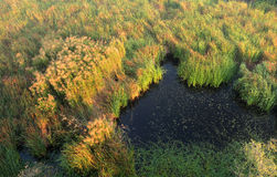 Black swamp landscape with grass Stock Photo