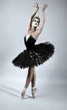 Black Swan Ballet Dancer Royalty Free Stock Image