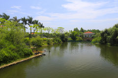 Black swan lake of tianzhu resorts hotel Stock Photo