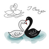 Black Swan and white (the contour set) Stock Image