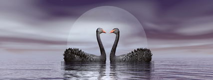 Black swans love - 3D render. Two black swans in front of moon on the water by beautiful night Royalty Free Stock Photo
