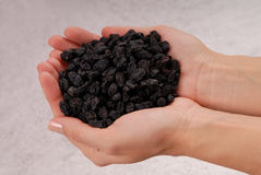 Black sweet raisin,  fistful of dried fruits is in female hands, Royalty Free Stock Photo