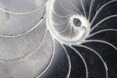 Black Swirl Shell Texture. Closeup Stock Photos