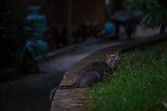 Black Tabby Cat on Green Grass during Night Time Royalty Free Stock Image