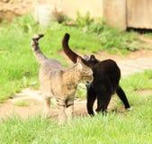 Black and tabby cats Stock Photo