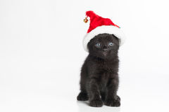 A Black Tabby Kitten Wearing a Red and White Santa Hat Stock Photo