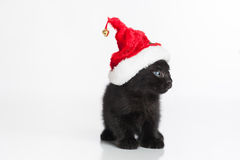 A Black Tabby Kitten Wearing a Red and White Santa Hat Stock Photography