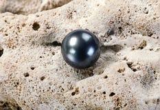 Black Tahitian Pearl. Large black Tahitian pearl on white coral royalty free stock photos