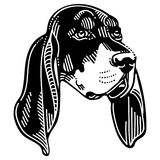 Black And Tan Coonhound Dog Stock Images
